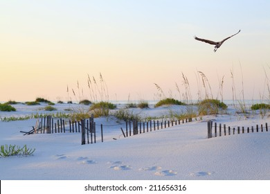 A Great Blue Heron Flying Over a Beautiful White Sand Florida Beach at Sunrise