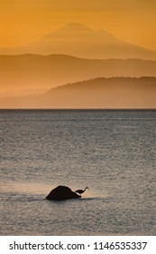 Great Blue Heron and Mount Baker. At dawn, a great blue heron fishes for food with Mount Baker looming large in the background. The morning fog gives the image an Asian painting look.