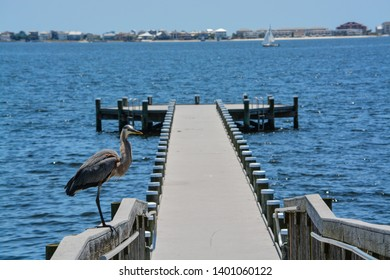 A Great Blue Heron standing on a railing at Gulf Breeze City Park in Santa Rosa County Florida, Gulf of Mexico, USA