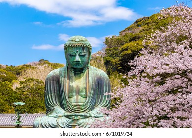 The Great Buddha.The foreground is cherry blossoms. Located in Kamakura, Kanagawa Prefecture Japan.