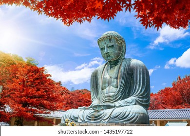 The Great Buddha of Kamakura at autumn season with red leaf, Kanagawa,Japan. Originally housed in a hall that was destroyed twice in the 14th Century, the great Buddha at Kotoku-in Temple dates fro