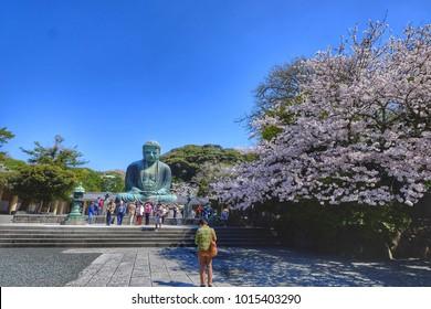 Great Buddha of Kamakura , Japan , Kamakura Daibutsu in Sakura season.