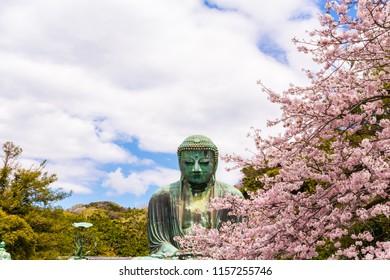 Great Buddha in Kamakura Japan.The foreground is cherry blossoms.Located in Kamakura, Kanagawa Prefecture Japan.