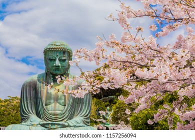 Great Buddha in Kamakura Japan.The foreground is cherry blossoms.Located in Kamakura, Kanagawa Prefecture Japan.