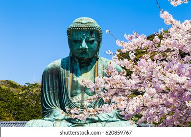 The Great Buddha  in Kamakura Japan. The foreground is cherry blossoms. Located in Kamakura, Kanagawa Prefecture Japan.
