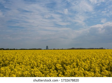 A great canola fields outside the city of Malmo