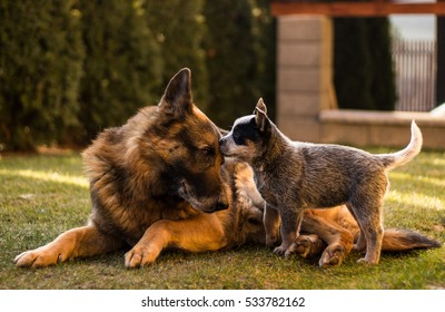 Great click capturing a pup and a dog sharing affection in the garden
