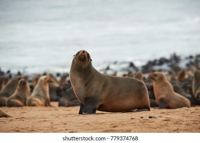Great colony of seals fur at Cape cross in Namibia
