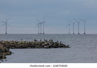 The great cormorant known as the great black cormorant watching out in Oresund. A wind power plant in the background