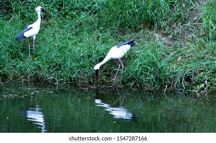 The great egret (Ardea alba), also known as the common egret, large egret, or (in the Old World) great white egret or great white heron is a large, and widely distributed.