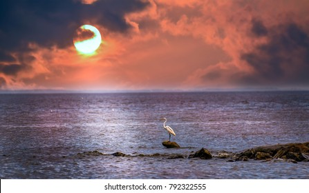 Great Egret standing on a rock in the Chesapeake Bay with the sun setting in the background