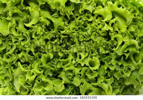 great fresh organic green lettuce background