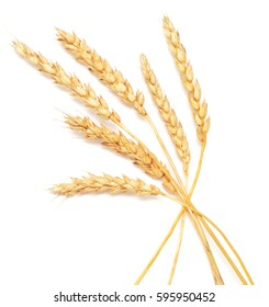 great golden wheat isolated on white background