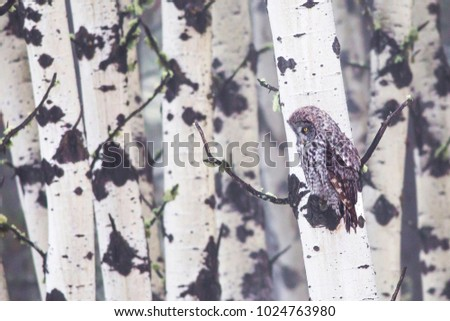 Great Grab Owl Tree Stock Photo (Edit Now) 1024763980