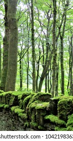 great green trees