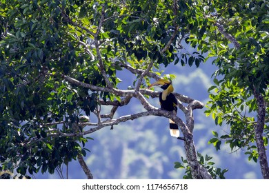 Great hornbill, Great indian hornbill, Great pied hornbill.