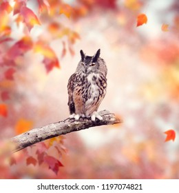 Great Horned Owl perched in the autumn woods