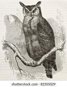 Great Horned-owl old illustration (Bubo virginianus), also known as Tiger Owl. Created by Kretschmer and Jahrmargt, published on Merveilles de la Nature, Bailliere et fils, Paris, 1878
