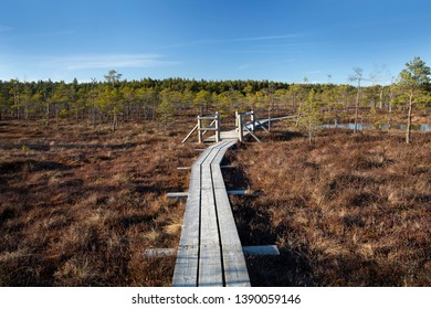 The Great Kemeri Raised bog Bog Boardwalk in the spring