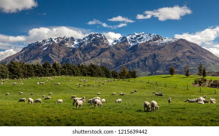 great landscape around Queenstown , NewZealand