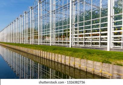 Great and long industrial tomato greenhouse on a sunny day in Maasdijk in Westland in the Netherlands with ditch in the foreground.