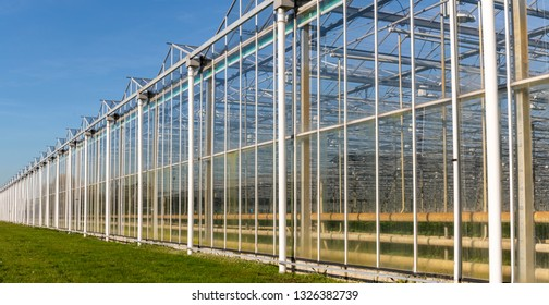 Great and long industrial tomato greenhouse on a sunny day in Maasdijk in Westland in the Netherlands.