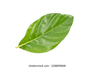 Great morinda, Tahitian noni, Indian mulberry, Beach mulberry (Morinda citrifolia) isolated on white background. concept Herbal and Vegetable extracts are medications for Reduce heart disease risk