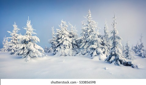 Great morning view of mountain forest after heavy snowfall. Misty winter landscape in the snowy wood, Happy New Year celebration concept. Artistic style post processed photo.
