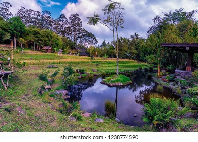 Great nature view of hill paddy planted in the Desa Bambu, Bandung. Soft focus effect due to large aperture setting.