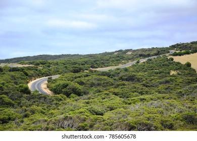 Great Ocean Road, passage among trees, between Torquay and Apollo Bay, Australia