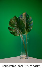 Great photo with art decoration plant in square glass vase. Good choise for different art projects, colages or posters