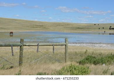 Great Plains of Montana