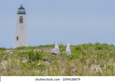 Great Point Lighthouse with Seagulls