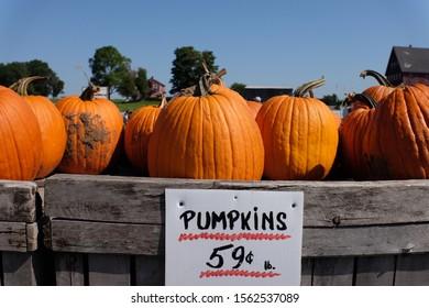 The great pumpkin farm in Boston