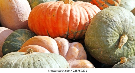 great PUMPKINS collections to decorate halloween night