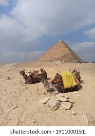 The Great Pyramid, obe of the wonders of the World and the camels near them, Egypt, Giza - Shutterstock ID 1911000151