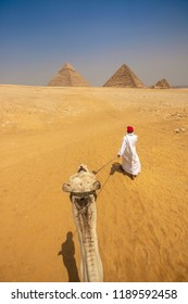 THE GREAT PYRAMIDS IN EGYPT - Egyptian man walks a camel through the desert to the Great Pyramid of Giza, and Giza Pyramid Complex. Camel riding tourist adventure. Giza, Egypt, just outside Cairo