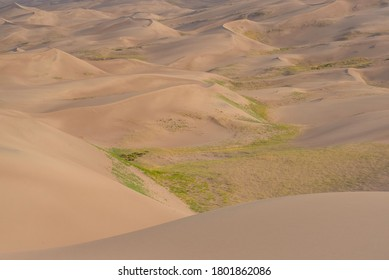 Great Sand Dunes National Park With Green Foliage