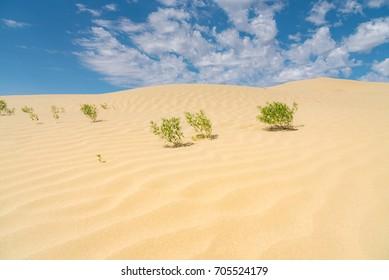 The Great Sand Hills in Saskatchewan, Canada.