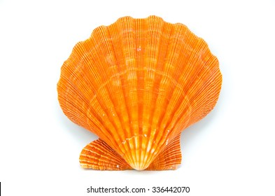 Great Scallop seashell on white background