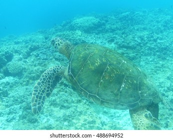 Great sea turtle swimming along underwater.