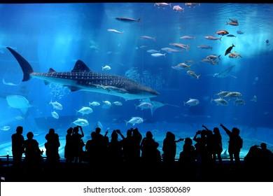 A Great Shark In An Aquarium