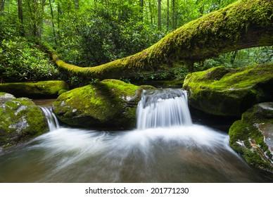Great Smoky Mountains National Park Roaring Fork Motor Nature Trail Fallen Log Cascade
