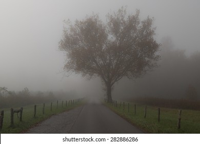 Great Smoky Mountains National Park - Tree in Fog - Cades Cove - Gatlinburg Pigeon Forge TN