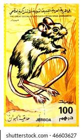 The Great Socialist Peoples Libyan Arab Jamahiriya - CIRCA 1991: A Stamp printed in The Great Socialist Peoples Libyan Arab Jamahiriya shows Jerboa, circa 1991