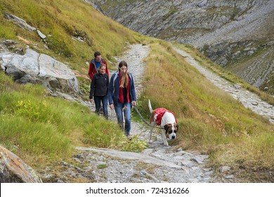 GREAT ST. BERNARD PASS, ITALY, SWITZERLAND - september 04: hike with saint bernard dog, bred for centuries in hospice of Great St. Bernard Pass on sept 04, 2017, border between Italy and Switzerland