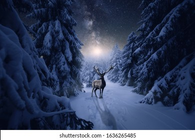 A great stag stands in a cold winter night in the snowy forest