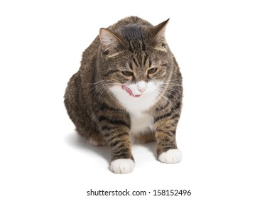 Great, striped, grey cat sits on a white background