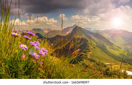 Great sunset with sunlight lens flares and backlit. Beautiful View from high mountain with flowers in foreground. Allgau, Alps, Austria, Germany.