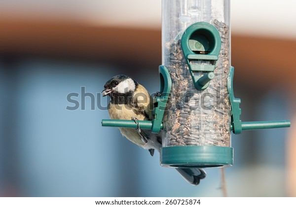 Speckled tit bird feeder